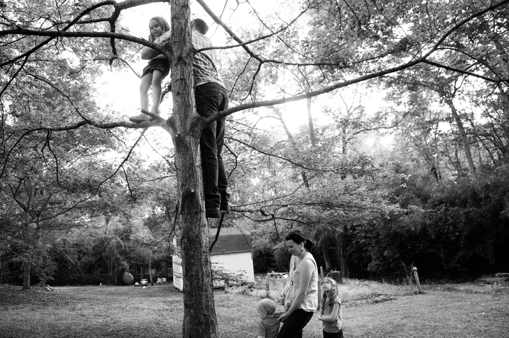 dad and daughter up high in a tree with mom and little girl and boy at bottom of tree